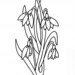 Desene Ghiocei