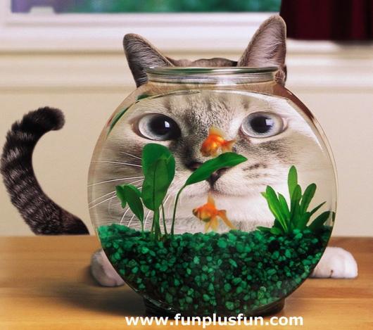 funny animals,funny cats,poze amuzante,poze funny,funny,hazliu,hazlii,super funny,pisici amuzante