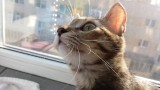 pisici frumoase,poze cu pisici