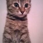 animalute spre adoptie,adoptie pisici,adoptie pisicute,pisicute spre adoptie,adoptie animale,pisici de vanzare